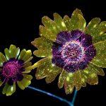 Mojave Beta 5 night flower wallpaper